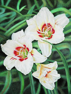 Drawing - White Daylilies Trio by Terry Mellway