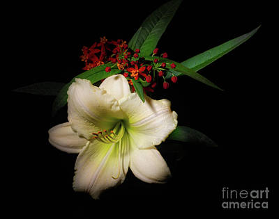 Photograph - White Daylily From The Garden by Ann Jacobson