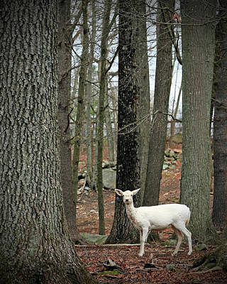 Photograph - White Deer In Woodland Forest by Brooke T Ryan