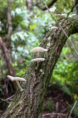 Photograph - White Deer Mushrooms by Christopher L Thomley