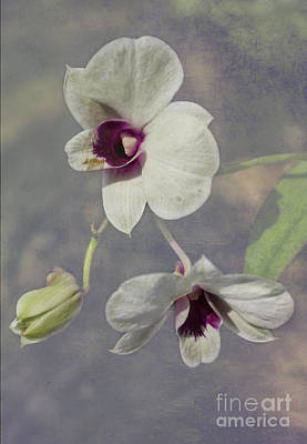 Photograph - White Dendrobium Textured by Michelle Meenawong