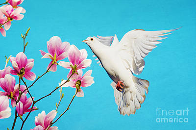 Dove Photograph - White Dove At Magnolia by Laura D Young