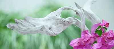 Photograph - White Driftwood by Toni Hopper