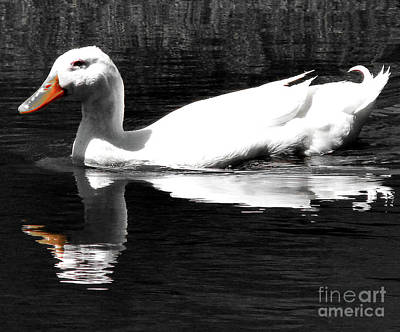 Photograph - White Duck On The Pond by Leara Nicole Morris-Clark
