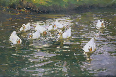 Duck Painting - White Ducks On Water by Franz Grassel
