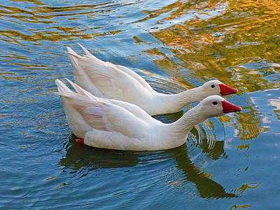Digital Art - White Ducks by Vilma Zurc