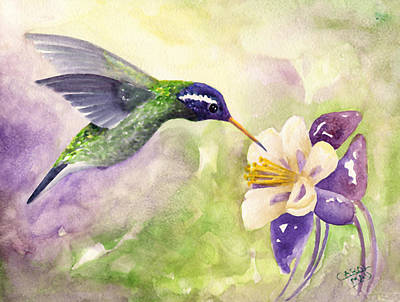 White-eared Hummingbird Print by Art by Carol May