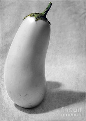 Photograph - White Eggplant Portrait by Nina Silver