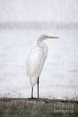 Photograph - White Egret At The Lake by Ella Kaye Dickey