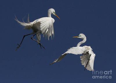 White Egret Ballet Art Print