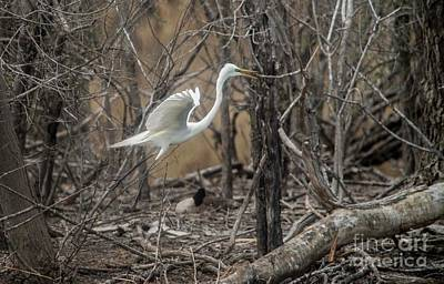Art Print featuring the photograph White Egret by David Bearden