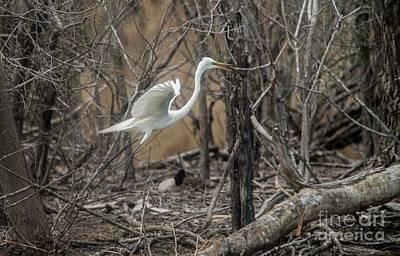 Photograph - White Egret by David Bearden