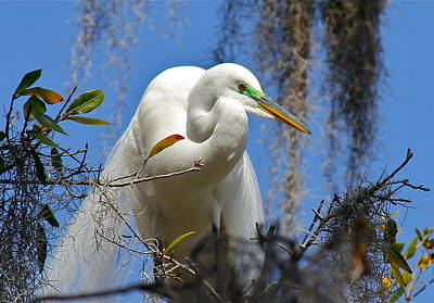 Photograph - White Egret by Denise Mazzocco