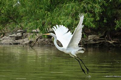 Photograph - White Egret Flaps And Landing Gear Down by Joni Eskridge