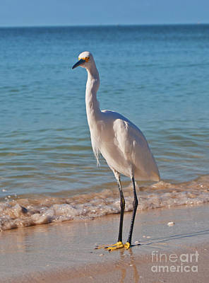 Photograph - White Egret by George D Gordon III