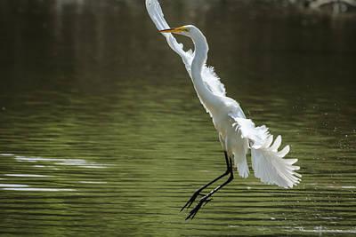 Photograph - White Egret - Grace In Motion by Joni Eskridge