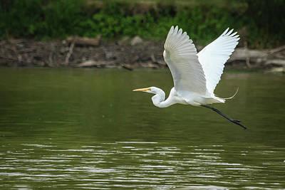 Photograph - White Egret In Flight by Joni Eskridge