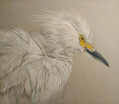 Pastel - White Egret In Full Ruffle by Joan Mansson