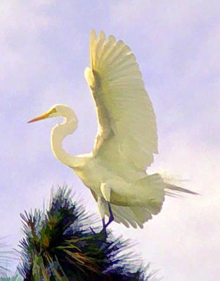 White Egret In Tree Art Print by Joel Cohen