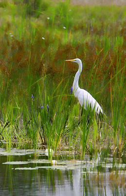 Photograph - White Egret In Waiting by Shari Jardina