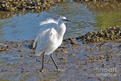 Photograph - White Egret by Terri Waters
