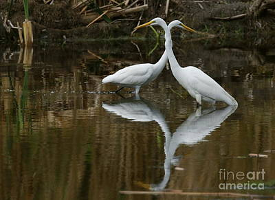 Photograph - White Egrets On Watch by Myrna Bradshaw