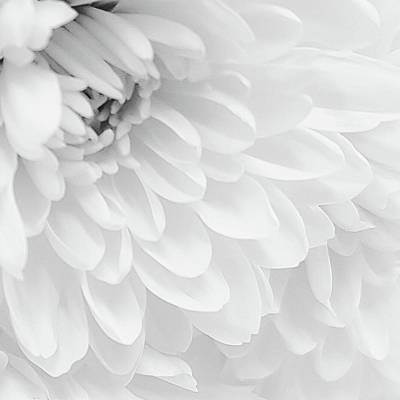 Photograph - White Elegance by Tracey Myers