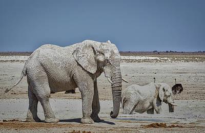 Photograph - White Elephants by Ernie Echols