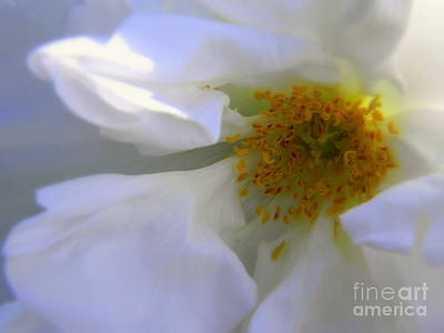 Photograph - White by Elfriede Fulda