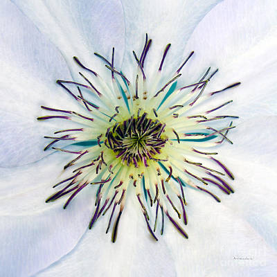 Photograph - White Expressive Clematis Flower Macro Photo 4922 by Ricardos Creations