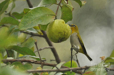 Painting - White Eye 2 by Anil Sharma