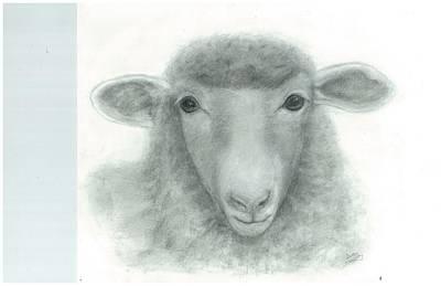 White Face Sheep Print by Danielle McCoy