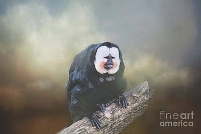 Photograph - White Faced Male Saki Monkey by Janette Boyd