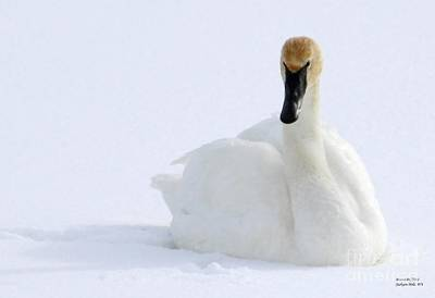 White Feathers On Snow Art Print