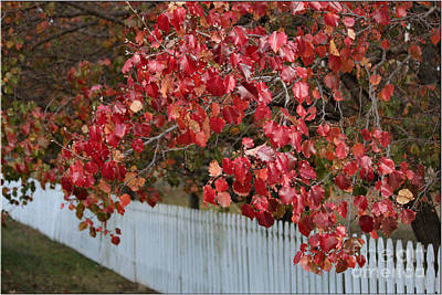 Chokecherry Photograph - White Fence by Luv Photography