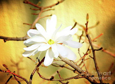 Photograph - White Flower by Inspirational Photo Creations Audrey Woods
