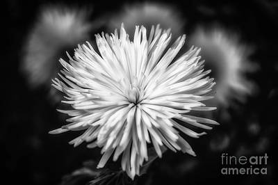Photograph - White Flower Black And White by Mary Raderstorf