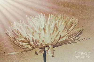 Digital Art - White Flower Breaking Dawn by Mary Raderstorf