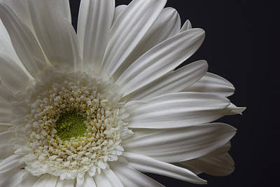 Photograph - White Flower by CA  Johnson