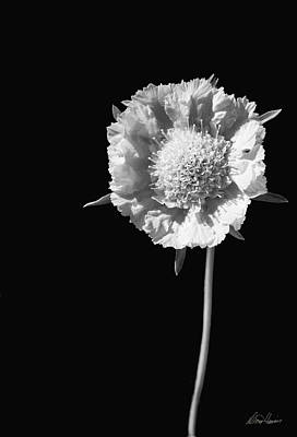 Photograph - White Flower by Diana Haronis