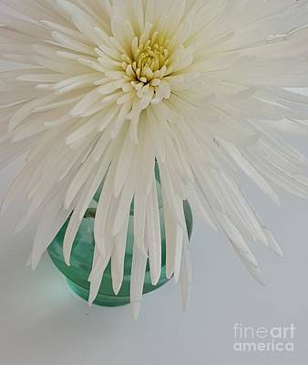 White Flower In A Vase By Jasna Gopic Art Print