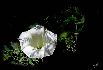 Photograph - White Flower In The Bush by Phil Rispin