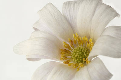 Photograph - White Flower by Mary Jo Allen