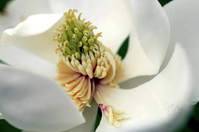 Print featuring the photograph Magnolia Blossom by Meta Gatschenberger