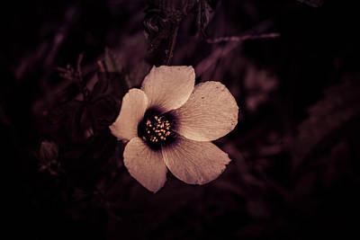 Photograph - White Flower by Petrus Bester