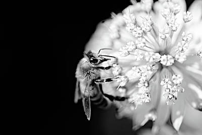 Photograph - White Flower by Tommytechno Sweden