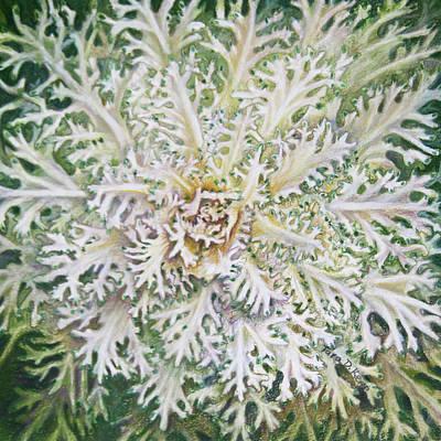 White Flowering Kale Original