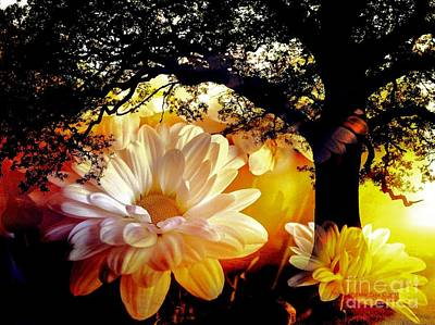 Photograph - White Flowers And Sun Rays by Annie Zeno