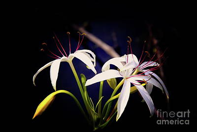 Photograph - White Flowers by Inspirational Photo Creations Audrey Taylor