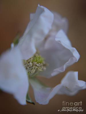 Photograph - White Flowers by Janice Spivey